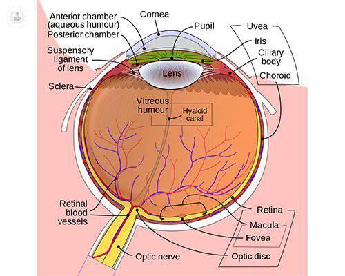 esquema-ojo