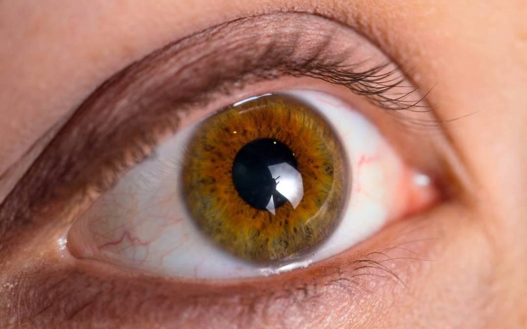 dia-mundial-del-glaucoma imágen de artículo