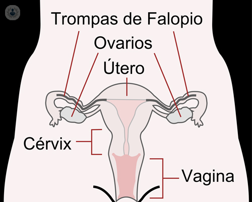 menopausia-climaterio
