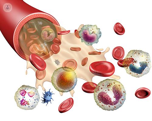 como-interpretar-un-hemograma