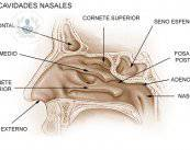 tabique-nasal
