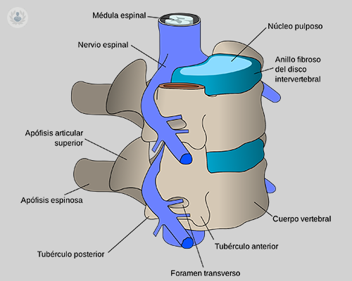 estructura-columna
