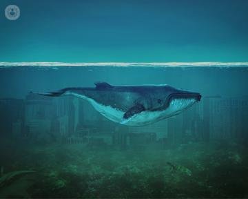 el-juego-de-la-ballena-azul